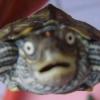 Sale de fiesta y acaba en urgencias con una tortuga en la vagina sin saber cómo llegó ahí