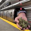 Con legalización de marihuana buscarán financiar presupuesto de transporte en trenes y autobuses
