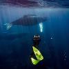 "Más de 20 millones de espectadores viven experiencia de las ballenas jorobadas en ""Good Morning América"""