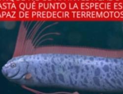 Reaparece pez al que se le relaciona como presagio de catástrofes