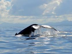 Medio Ambiente inicia temporada de observación de ballenas con estricto protocolo sanitario